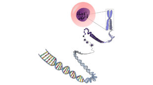 in-genomics-breakthrough,-harvard,-nvidia-researchers-use-ai-to-spot-active-areas-in-cell-dna