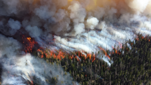 shoot-from-the-stars:-startup-provides-early-detection-of-wildfires-from-space