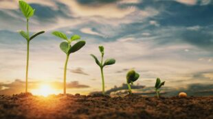food-for-thought:-startups-harness-ai-to-nurture-the-future-of-agriculture